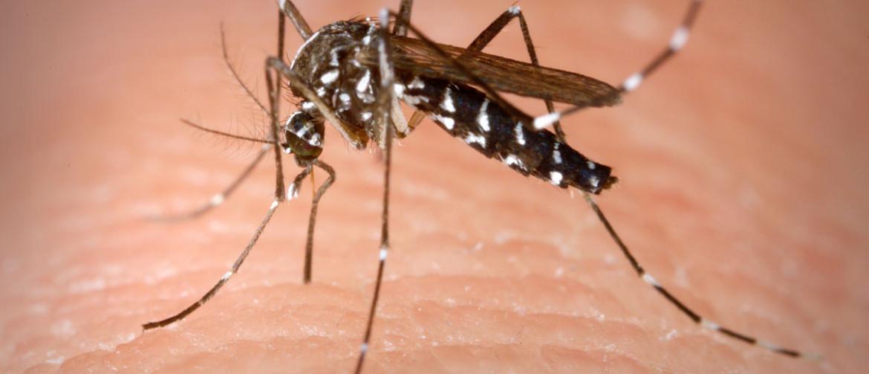 Zanzare in bagno